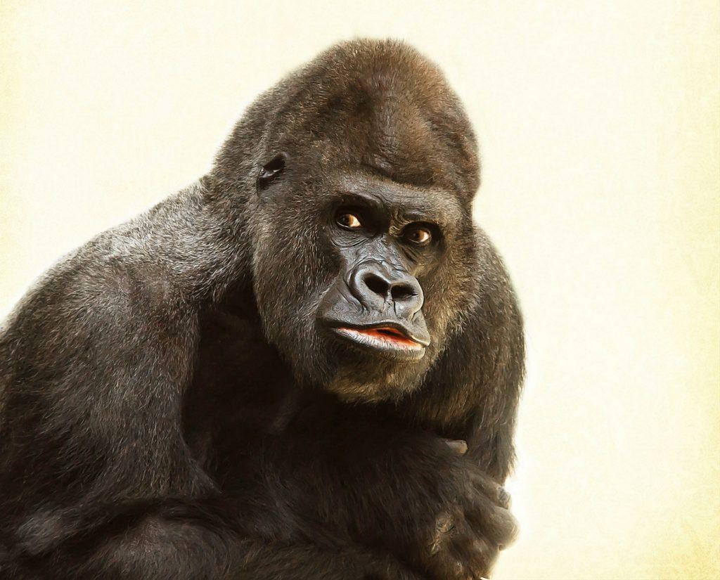 мир обезьянок 2