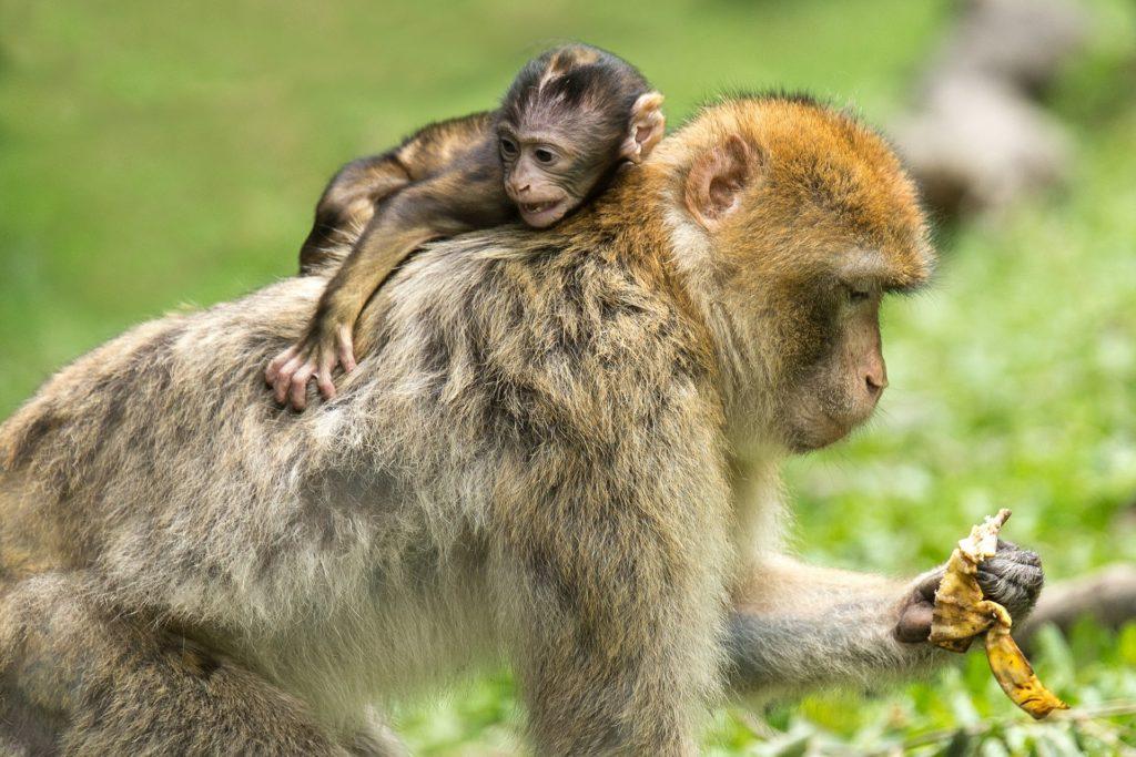 мир обезьянок 3