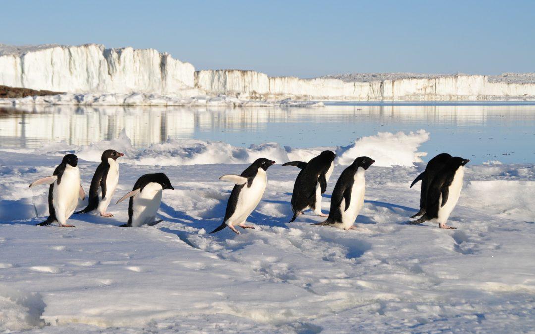 стихи про пингвинов для детей 2 фото