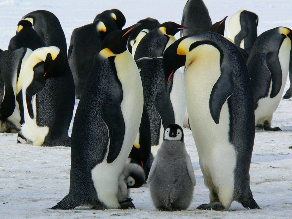 стихи про пингвинов для детей 3 фото
