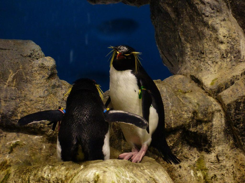 стихи про пингвинов для детей 4 фото