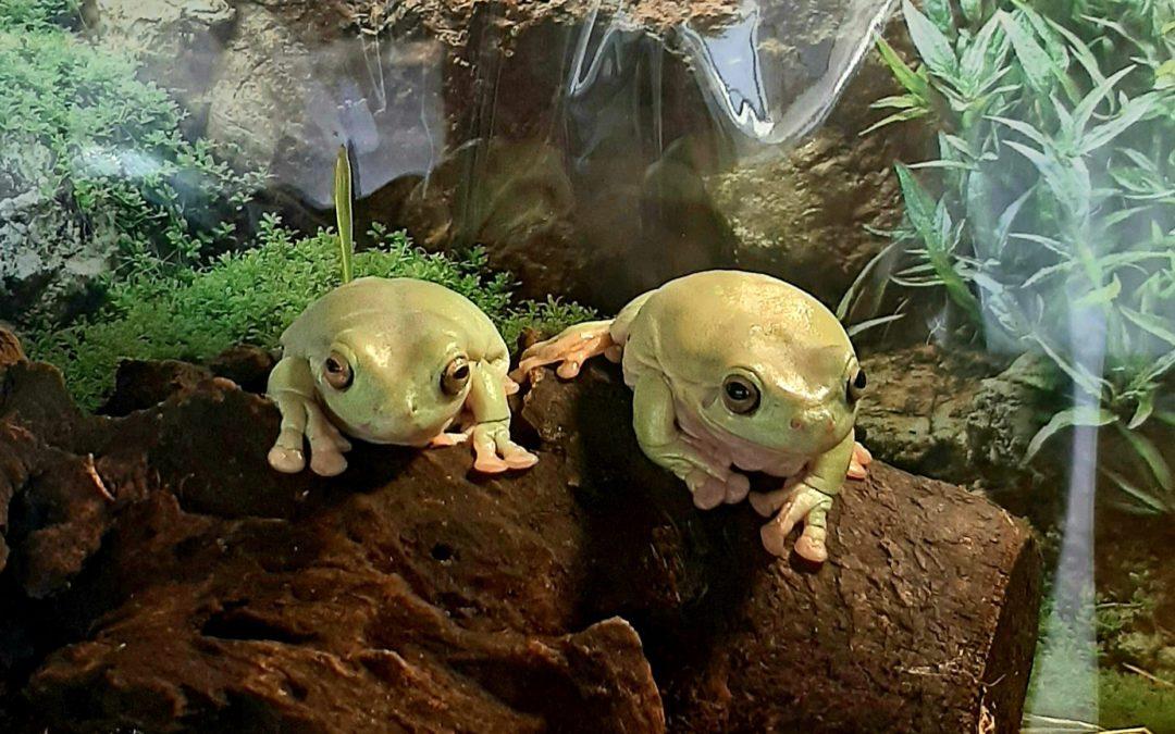 стих про лягушек фото
