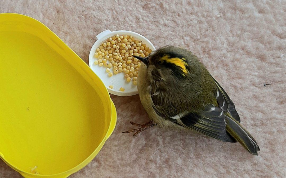 Стихи про птиц. Неожиданный гость